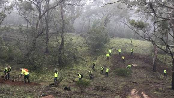 ABOVE: Parks Victoria staff working to close down the illegal mountain bike trail. Picture: CONTRIBUTED